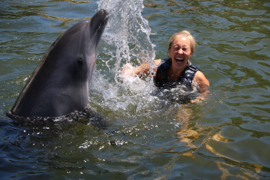 Pictured above: Island Dolphin Care, 2018 Animal Welfare and Animal-Assisted Program grant recipient.